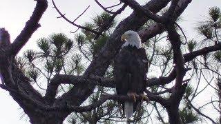 Dick Pritchett Real Estate Eagle Cam - Videos