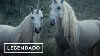 ☆LiL PEEP☆ x  horsehead - right here (legendado)