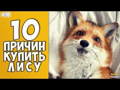 10 ПРИЧИН КУПИТЬ ЕНОТА - Моя Десятка