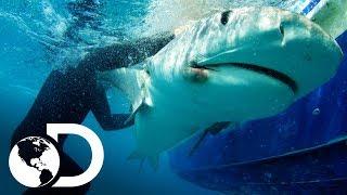 Los encuentros con tiburones más emocionantes | Discovery Latinoamérica