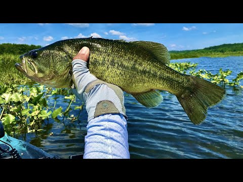 James River Beauty, Kayak Bass Fishing Virginia