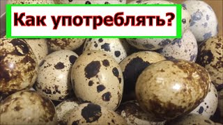 Сырые перепелиные яйца как употреблять. Перепелиные яйца польза и вред.