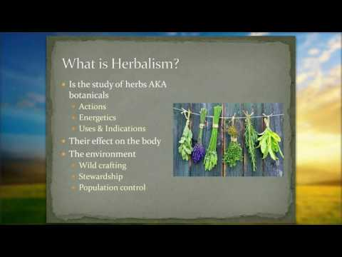 Introduction to Herbalism  - The Foundation of Understanding Plants