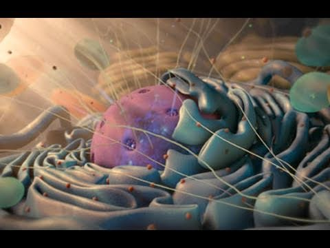 Incredible Animation Demo Reel | 2011 | Nucleus Medical Media