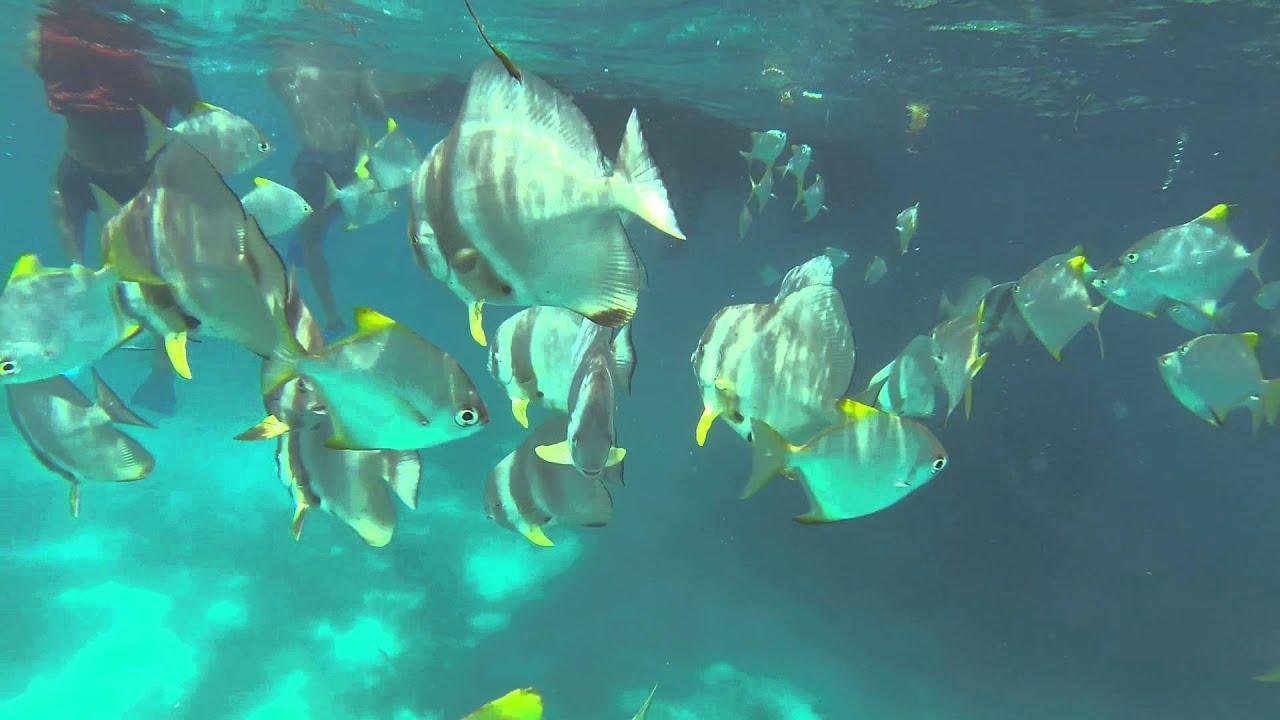 نتيجة بحث الصور عن sainte anne marine national park