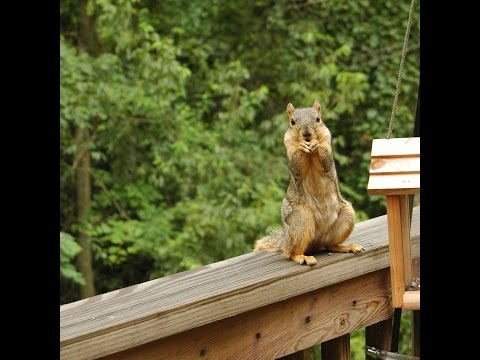 How to Stop Squirrels from Climbing to Bird Feeders
