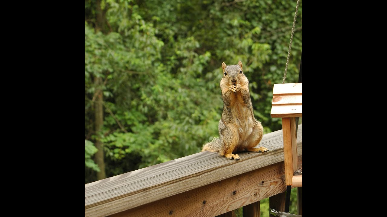 hg at birds seeds squirrels feeding feeder from away off bird tips ssf summer keep index