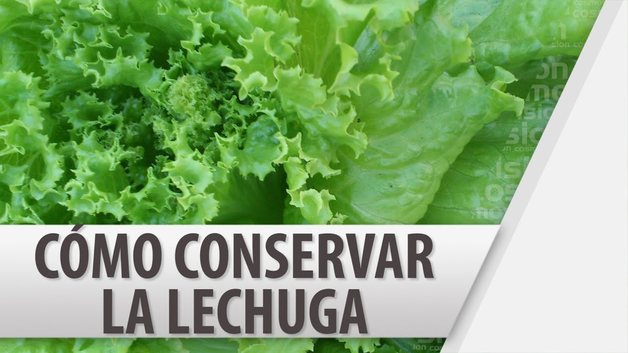 Cómo Conservar La Lechuga Cosmovision Youtube