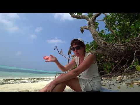 1 часть.Мальдивы остров Тодду Thoddoo.