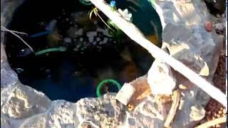 Бассейн с рыбками(золотые рыбки)