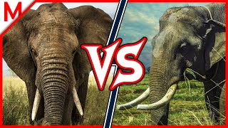 African Elephant vs Asian Elephant | ANIMAL BATTLE (+ Serval vs Ocelot winner)