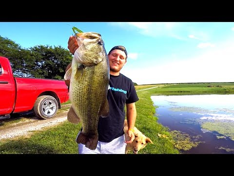 Thumbnail: Catching GIANT Bass on Topwater Frogs!!!