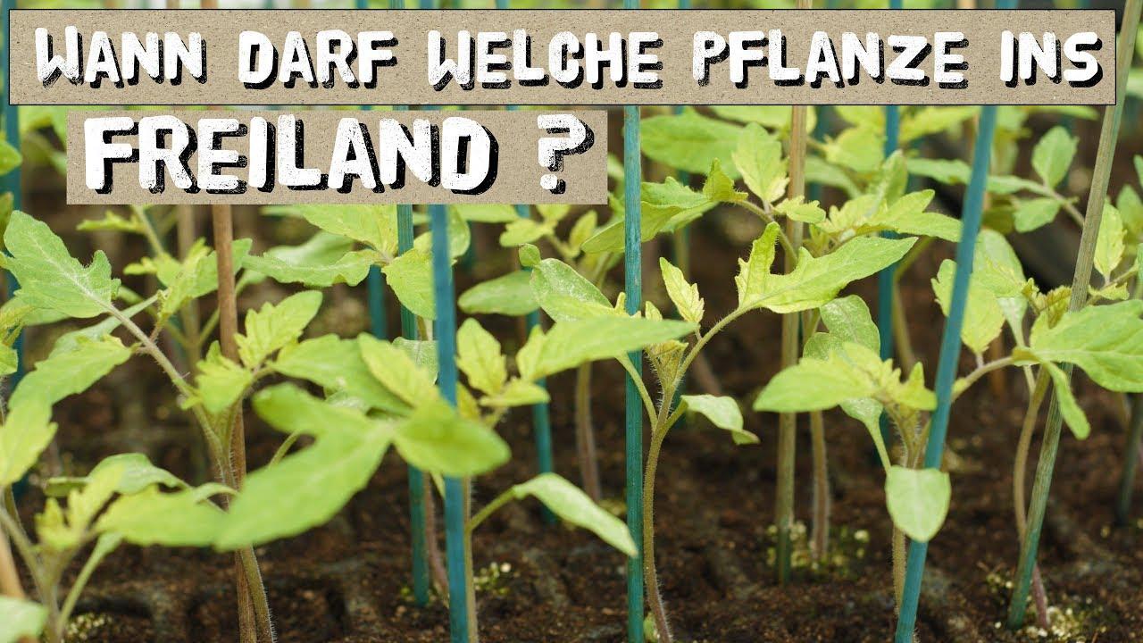 Diese Pflanzen Dürfen Nicht Zu Früh Ins Freiland! Und