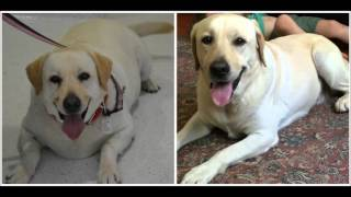 Dog Weight Loss Transformation Video