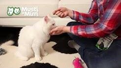 Kissanpennun kouluttaminen