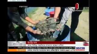 Shrimp farming (17-11-2015)