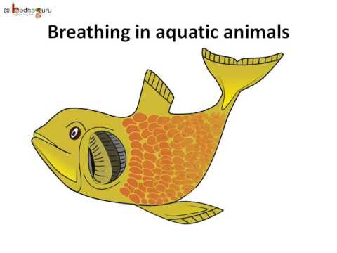 Science - Breathing In Animals, Insects - English