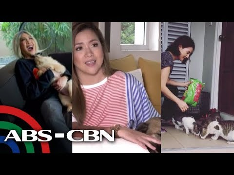 Rated K: Pet Lovers
