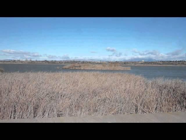 Mestral a l'Estany d'Ivars (Pla d'Urgell) Febrer 2015