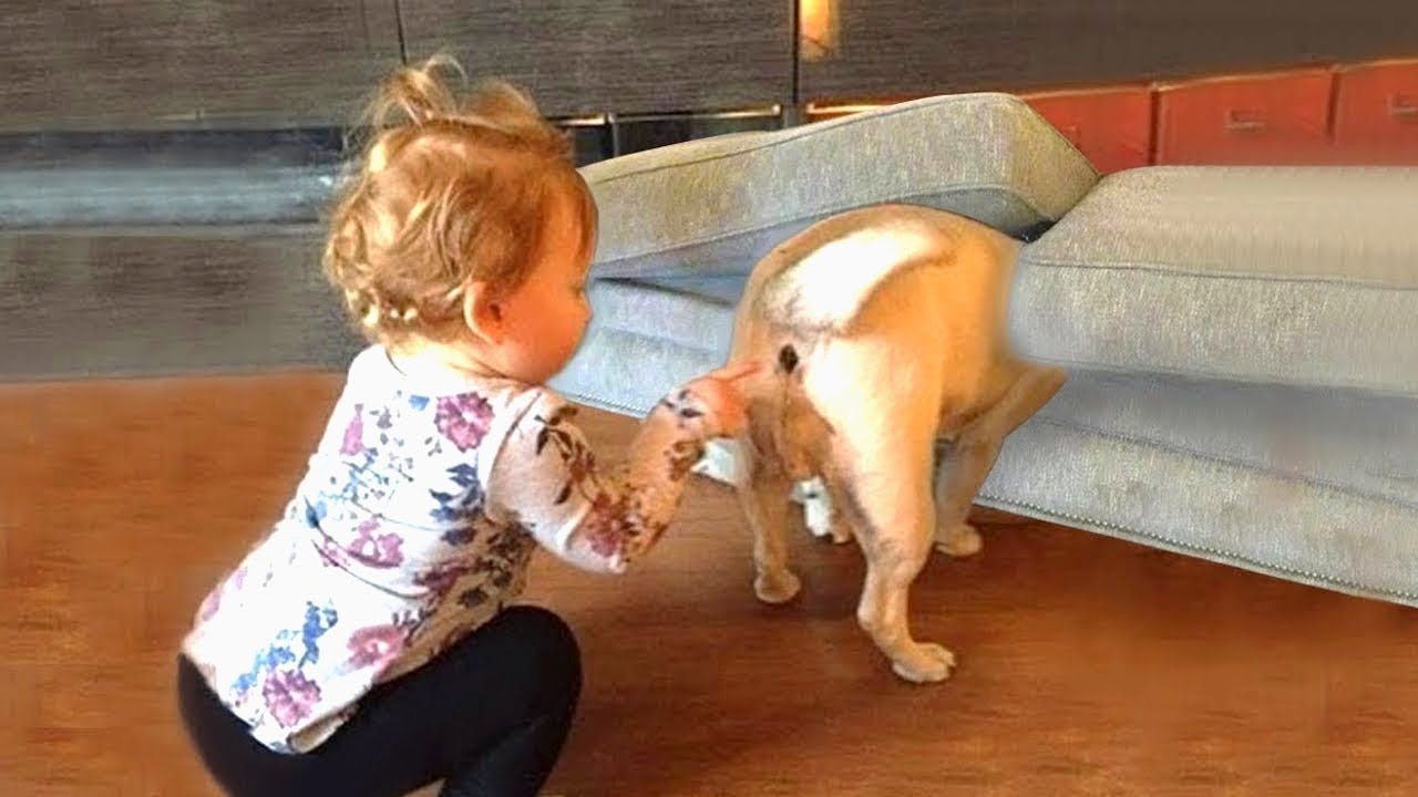 Funny Videos Animals - ? It's time to LAUGH with Dog's life - Dog 2020