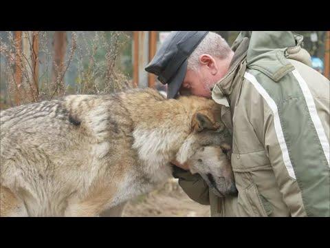 Волчица пришла в деревню и стала просить еду. Один мужчина пожалел её, через 2 месяца она вернулась