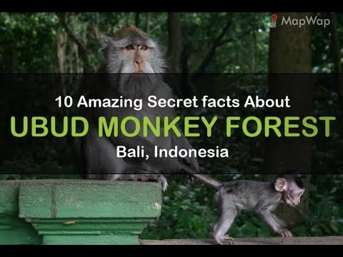 10 Amazing Secret Facts About Ubud Monkey, Bali, Indonesia