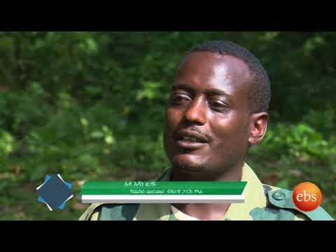 Sourthern ethiopia A