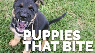 Puppies That Bite With Michael Ellis