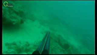 Dentex Dentex 7.6kg Gibraltar Strait.      Visit Odoc.tv