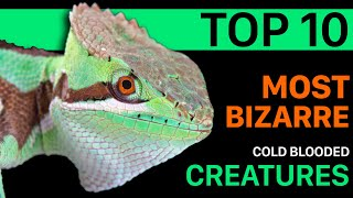 TOP 10 Most Bizarre Cold Blooded Creatures. The  COLD INSTINCT Book