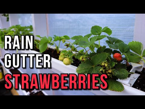 EASY BUILD Strawberry GUTTERS in the GREENHOUSE!
