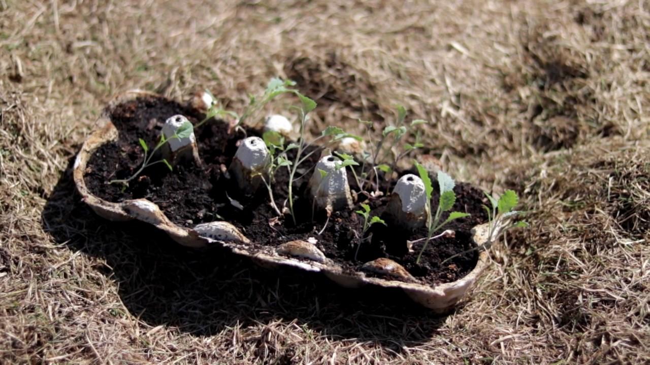 Przygotowanie Gleby Pod Warzywa Youtube
