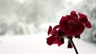 Snow Flower- Joi Chua (对不起我爱你蔡淳佳 英文版)