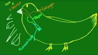 Sistema digestrio das Aves - Diversidade dos Seres Vivos - Biologia