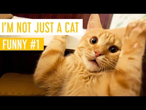 Funny Cat Videos #1 - I'm Not Just A Cat - Meow Paw
