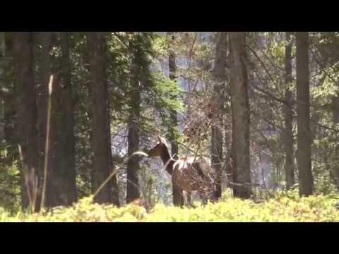 Banff National Park - Elk Scoop n' Run