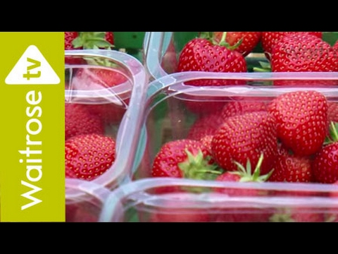 Visit To A Waitrose Strawberry Farm | Waitrose