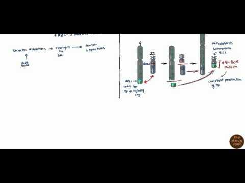 Acute Myelogenous Leukemia (AML) & Chronic Myelogenous Leukemia (CML)for USMLE
