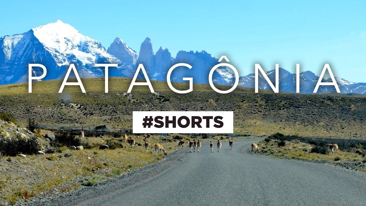 Torres del Paine e os guanacos • Série Patagônia Ushuaia #shorts