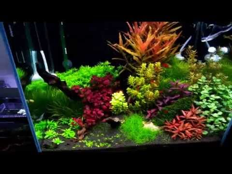 30 Gallon Dutch Aquarium