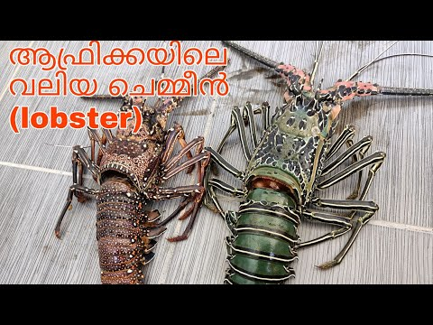 19.ആഫ്രിക്കൻ ലോബ്സ്റ്റർ ഫ്രൈ (LOBSTER )cutting cleaning cooking of1kg lobster/Africa malayalam🇰🇪