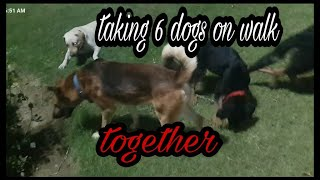 Taking 6 dogs on night walk together
