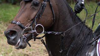 Horses are not machines // 2018 Kentucky Derby winner + Badminton Horse Trials