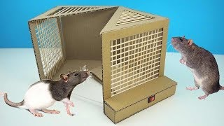 Simple Rat Trap Machine from Cardboard   How To Install Rat Trap Technology