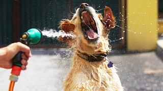 犬と水、愛らしい組み合わせ! 購読する:http://bit.ly/FunnyPetMedia ...