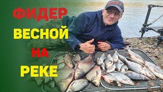 Рыбалка на фидер весной на реке Ловим леще и большую плотву