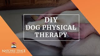 Post Injury Rehabilitation for Dogs: Cruciate Ligament Surgery