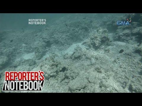 Reporter's Notebook: Mga coral reef sa Scarborough Shoal, nasira na