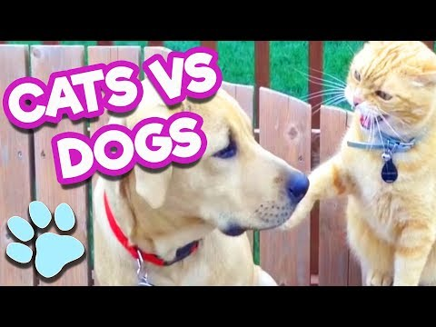 Cats Vs Dogs 😼🐶 | #thatpetlife