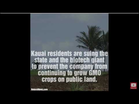 Kauai Groups Sue State, Syngenta To Stop GMO Farming...